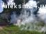 Уничтожение шершней и ос в Алексине